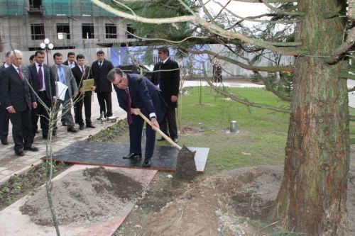 Душанбе секвойя