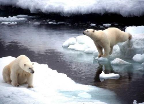 Учёные просчитали последствия глобального потепления для России