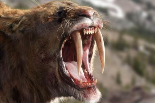 A-Sabre-tooth-cat-1869635
