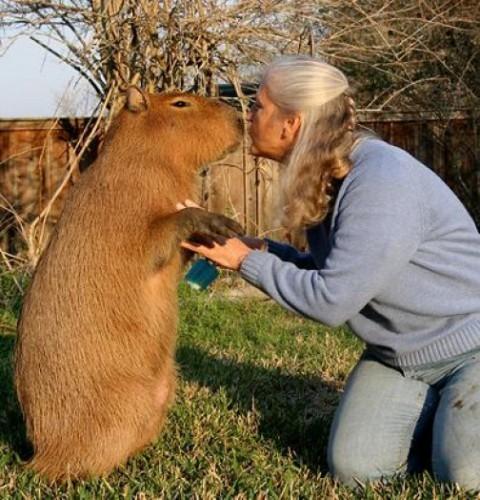 capybara1-e1287211708445