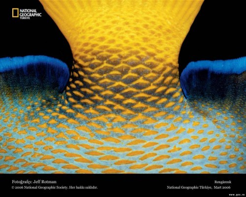 national-geographic04