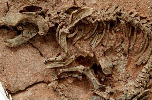 skelety2