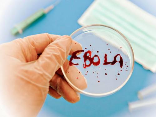 Эбола-лихорадка