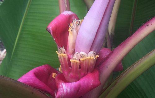РБ цветок