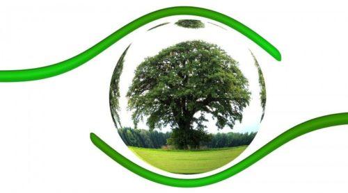 Зеленая среда